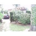 CHALET OLIVA NOVA REF 0400